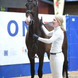 Jacky Ickx (Blue Horse Zack x Lennard)